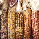 Kelmuya: November's Hopi Ceremony