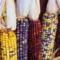 5 Native American Thanksgiving Food Favorites